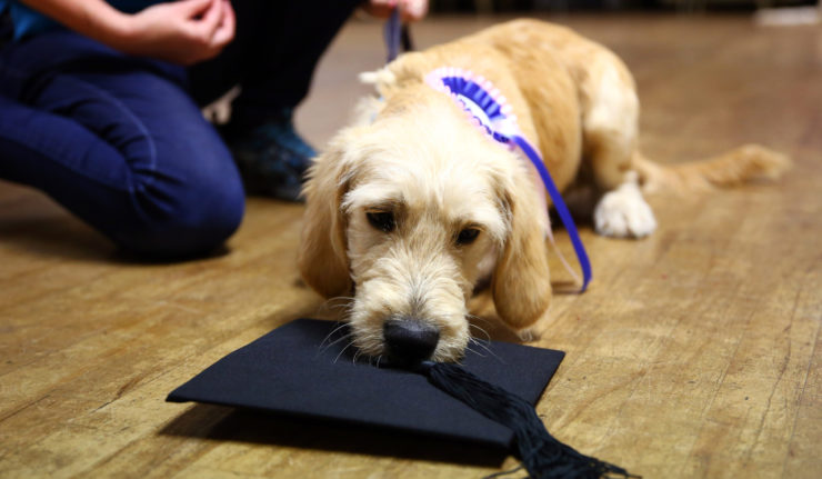 puppy school Leicestershire