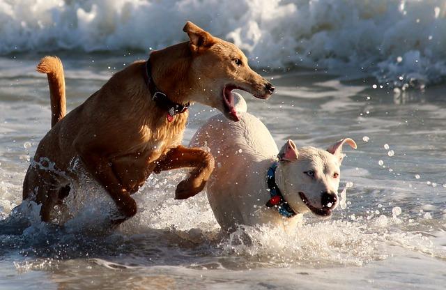 dog beach Norfolk