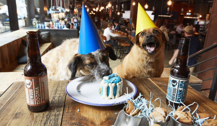 brewdog dog party