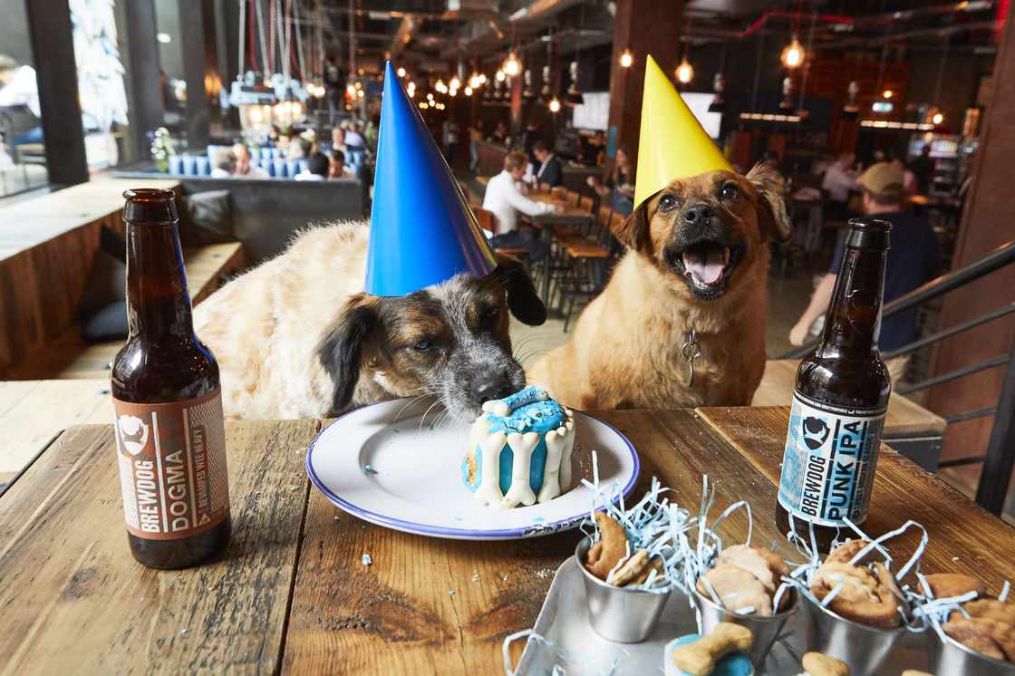 brewdog dog party