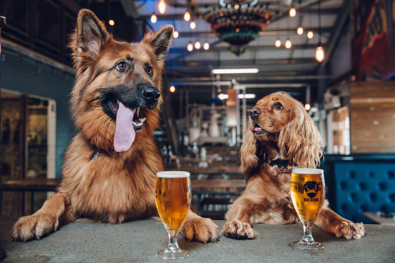 brewdog dog pawty