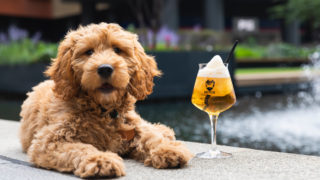 brewdog slushies Leicester