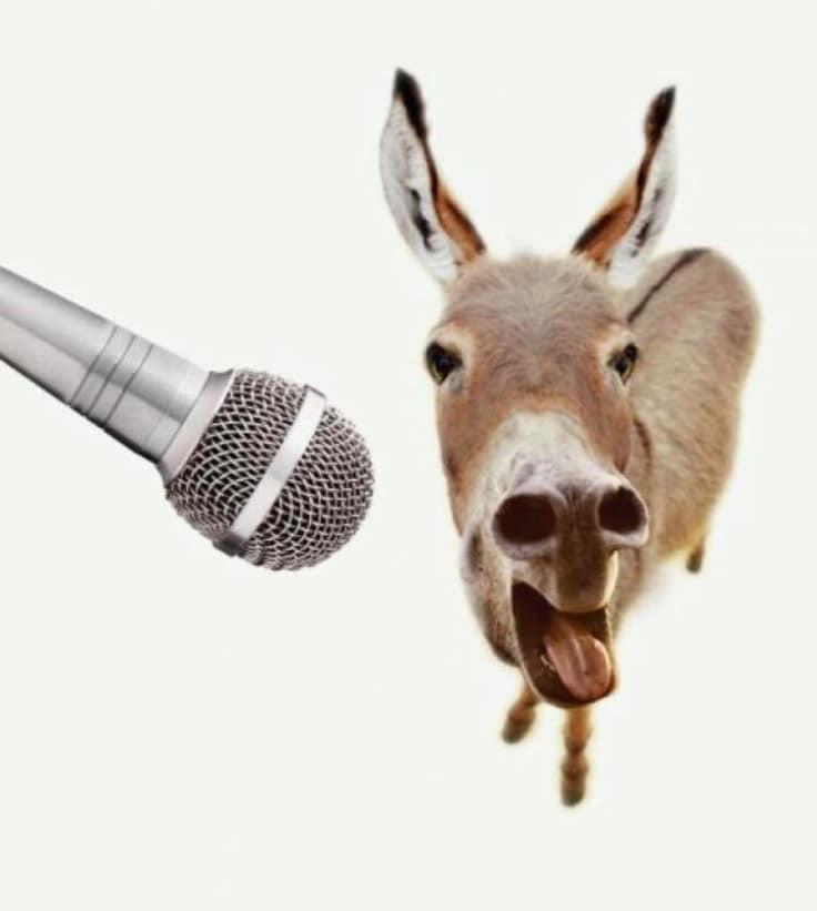 donkey karaoke