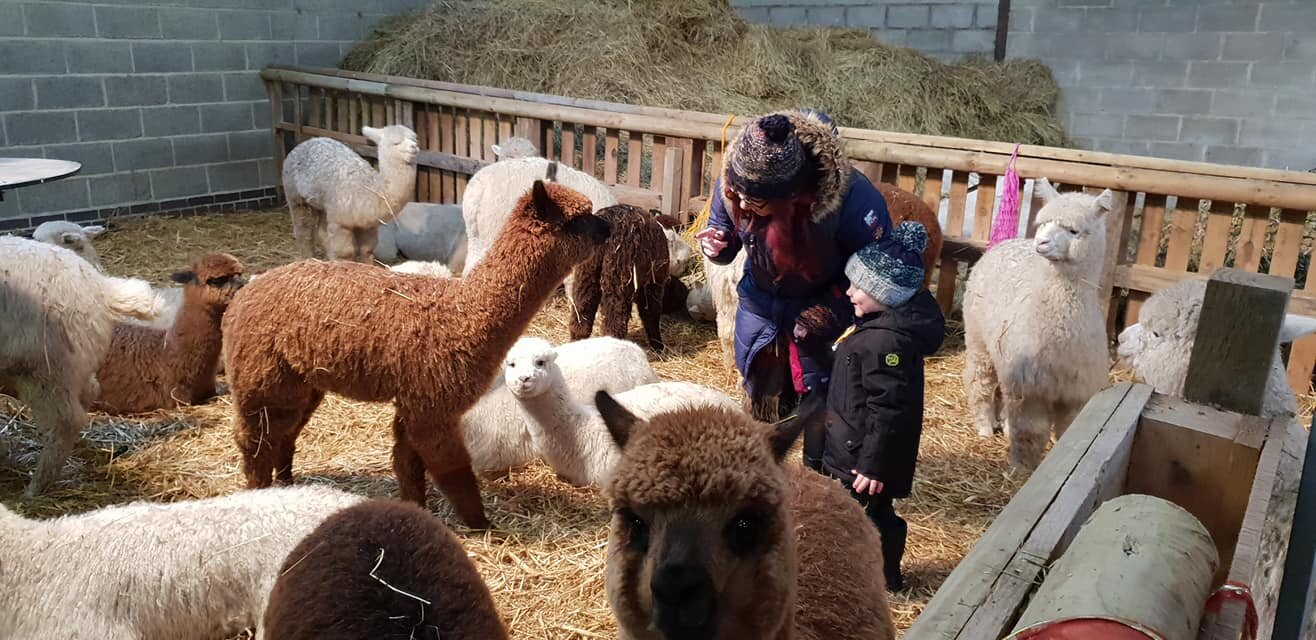 Charnwood forest alpacas leicester