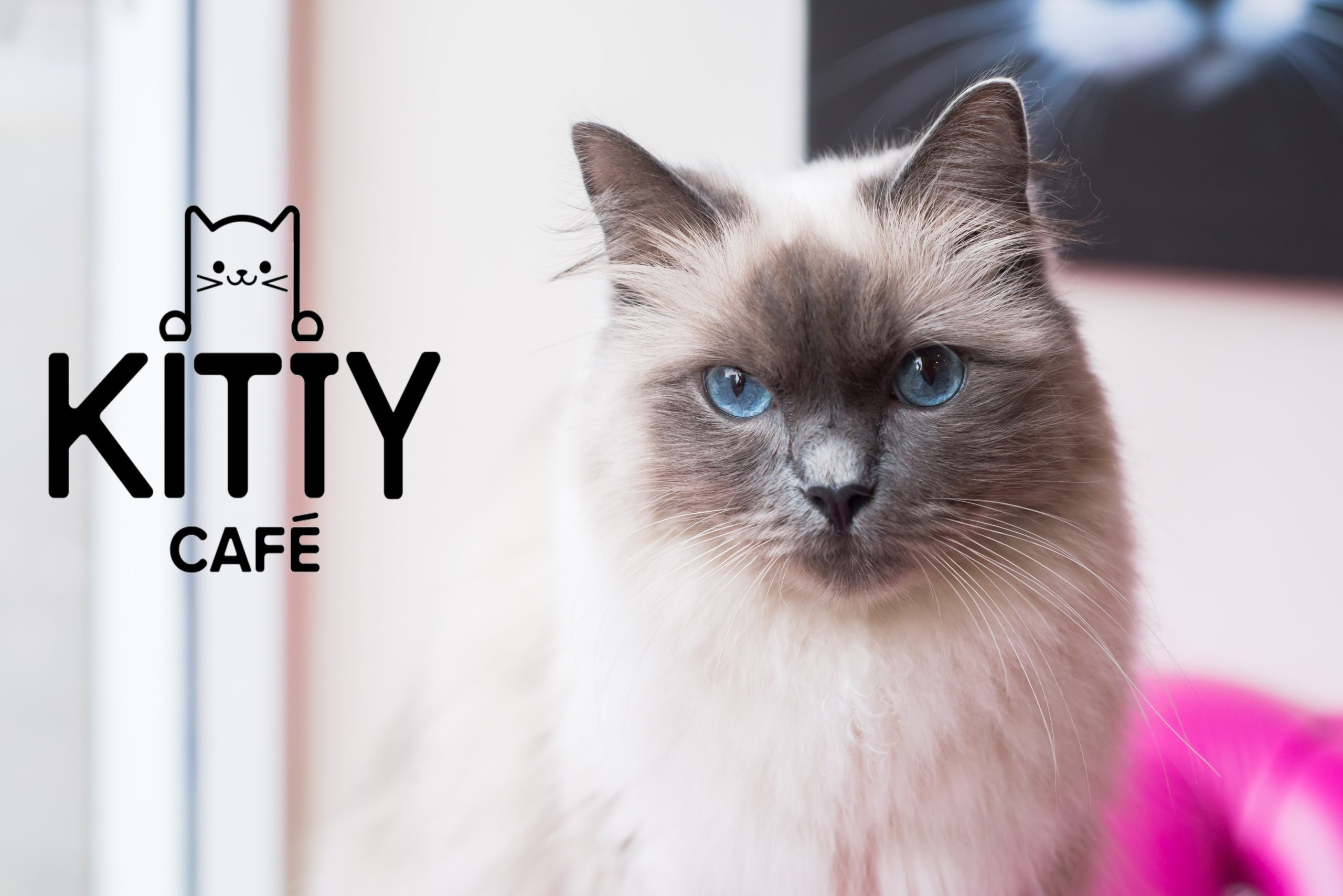 kitty cafe leicester
