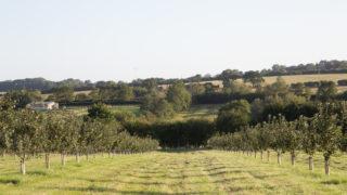 cidentro cider